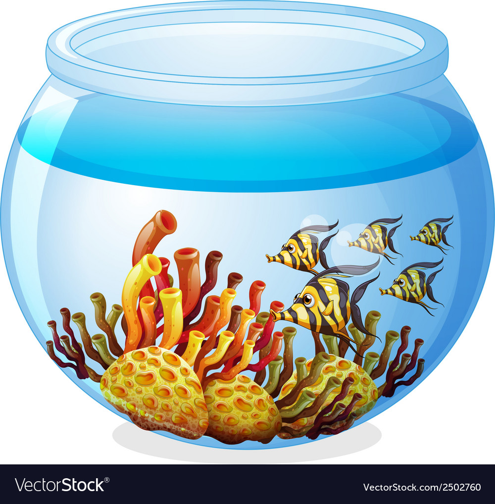 An aquarium with fishes vector | Price: 1 Credit (USD $1)