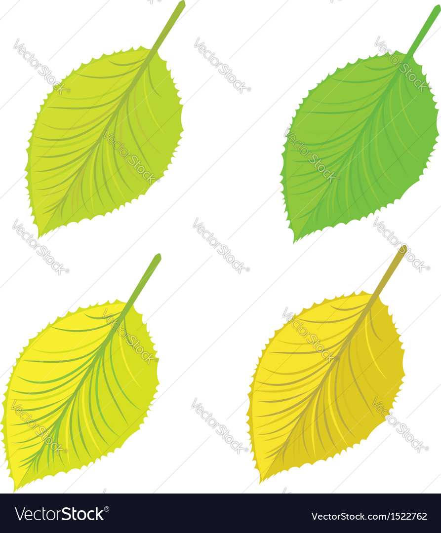 Isolated leaves set vector | Price: 1 Credit (USD $1)