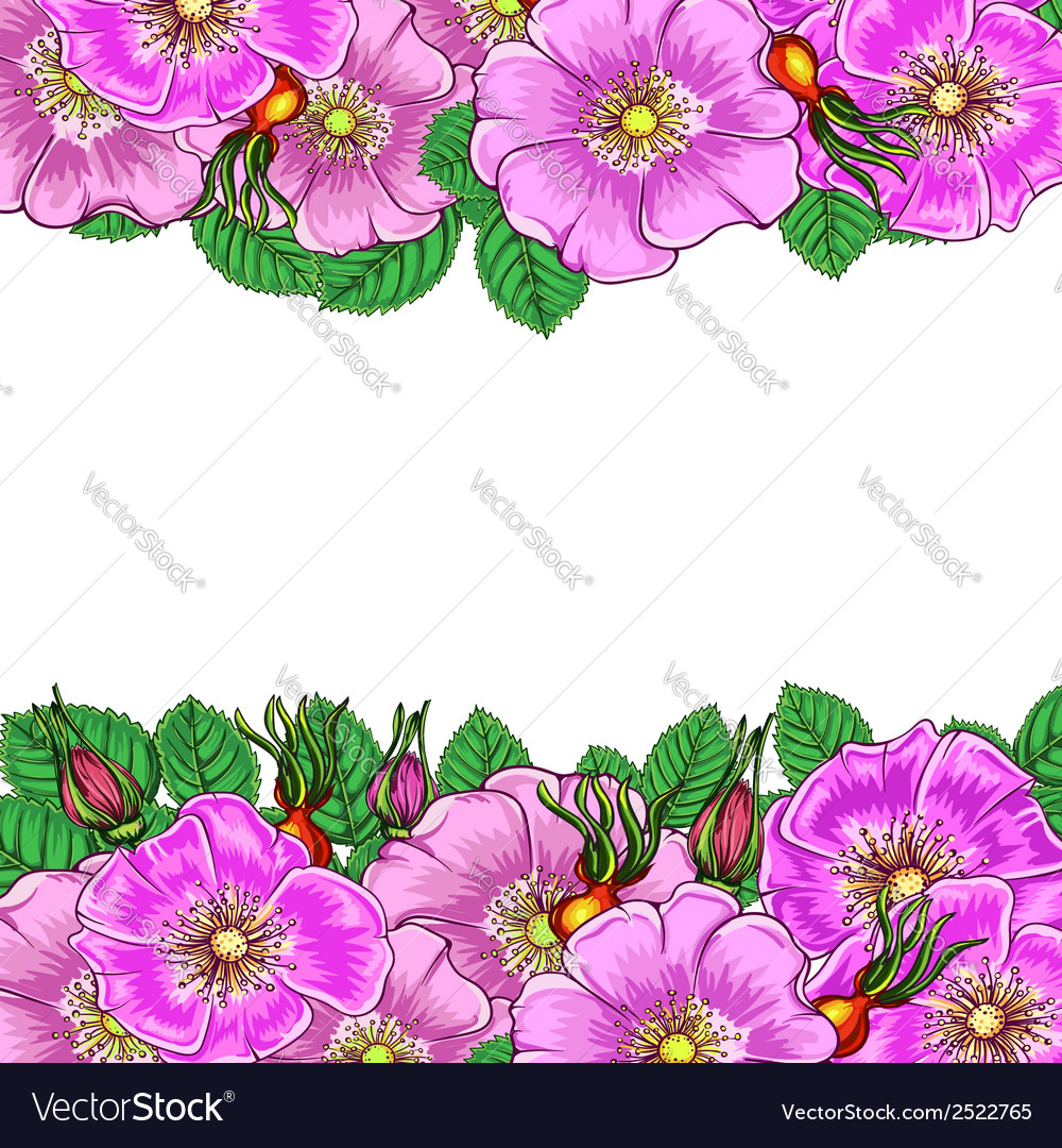 Floral background with flowers rosehip vector | Price: 1 Credit (USD $1)