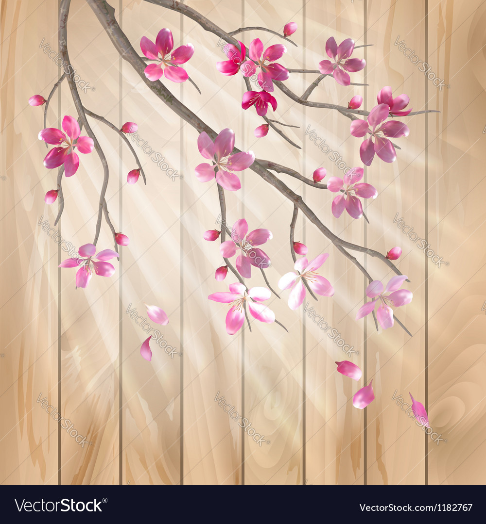 Spring cherry blossom flowers on a wood texture vector | Price: 1 Credit (USD $1)