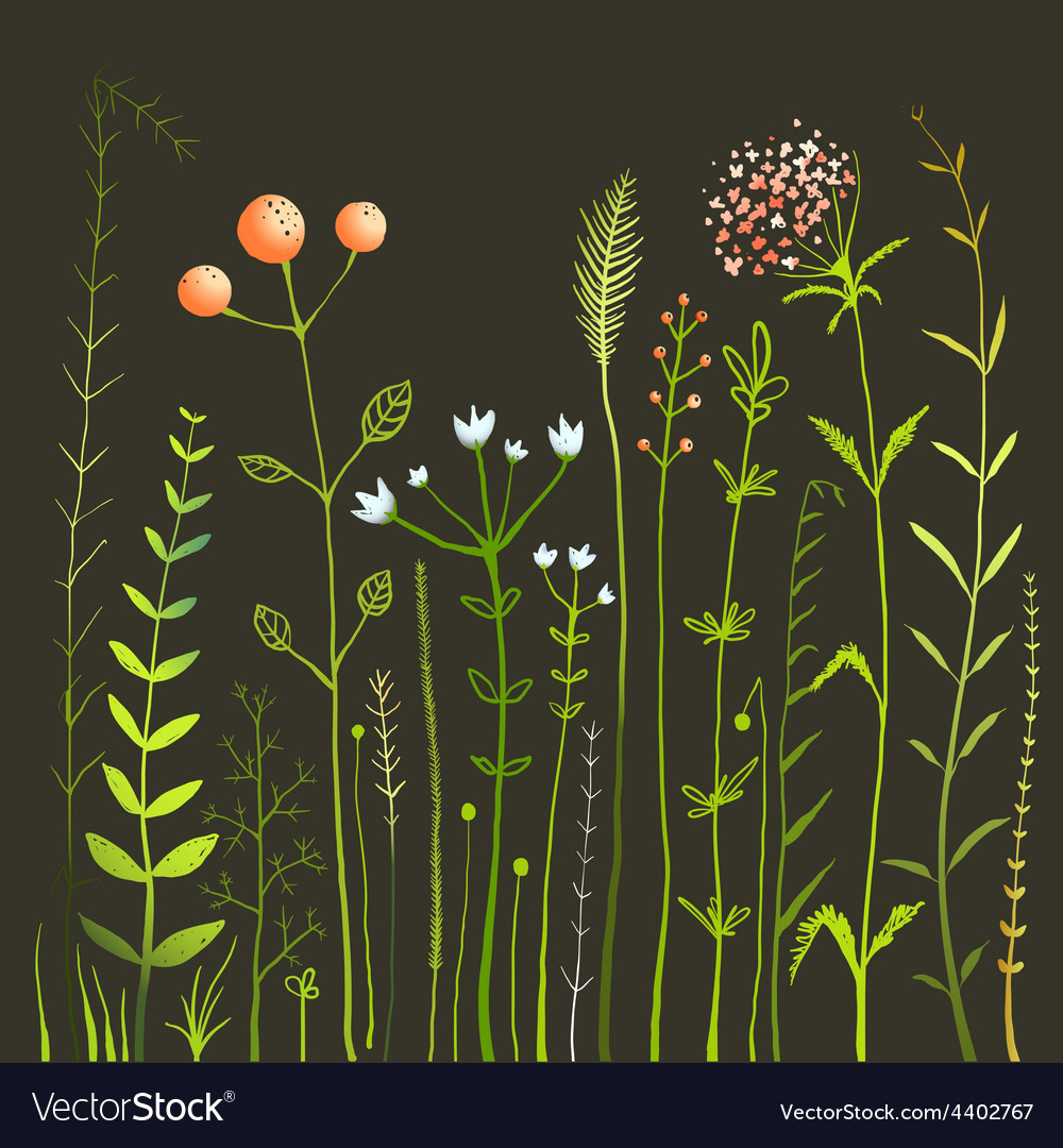 Wild flowers and grass field on black collection vector | Price: 1 Credit (USD $1)