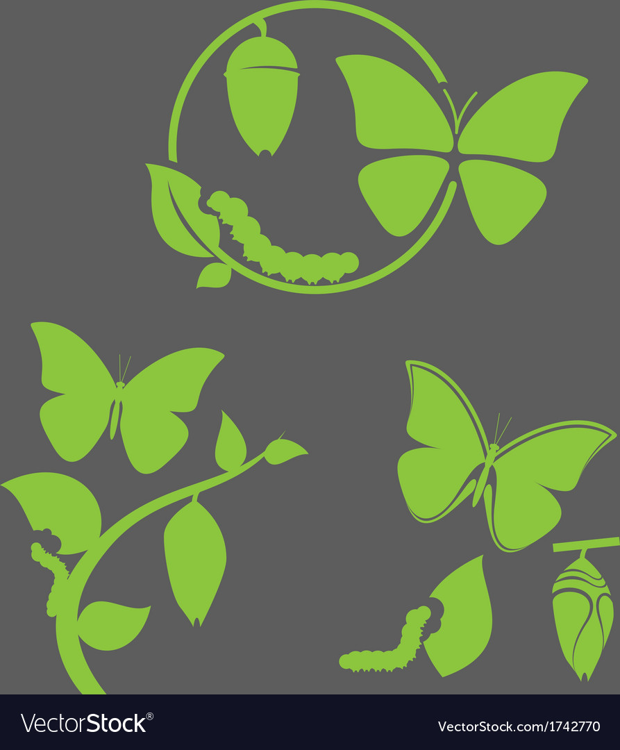 Butterfly cycle vector | Price: 1 Credit (USD $1)