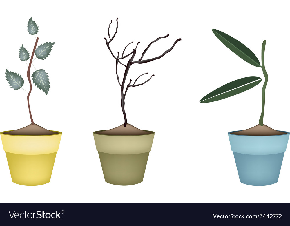 Fresh green and dry plants in flower pots vector | Price: 1 Credit (USD $1)