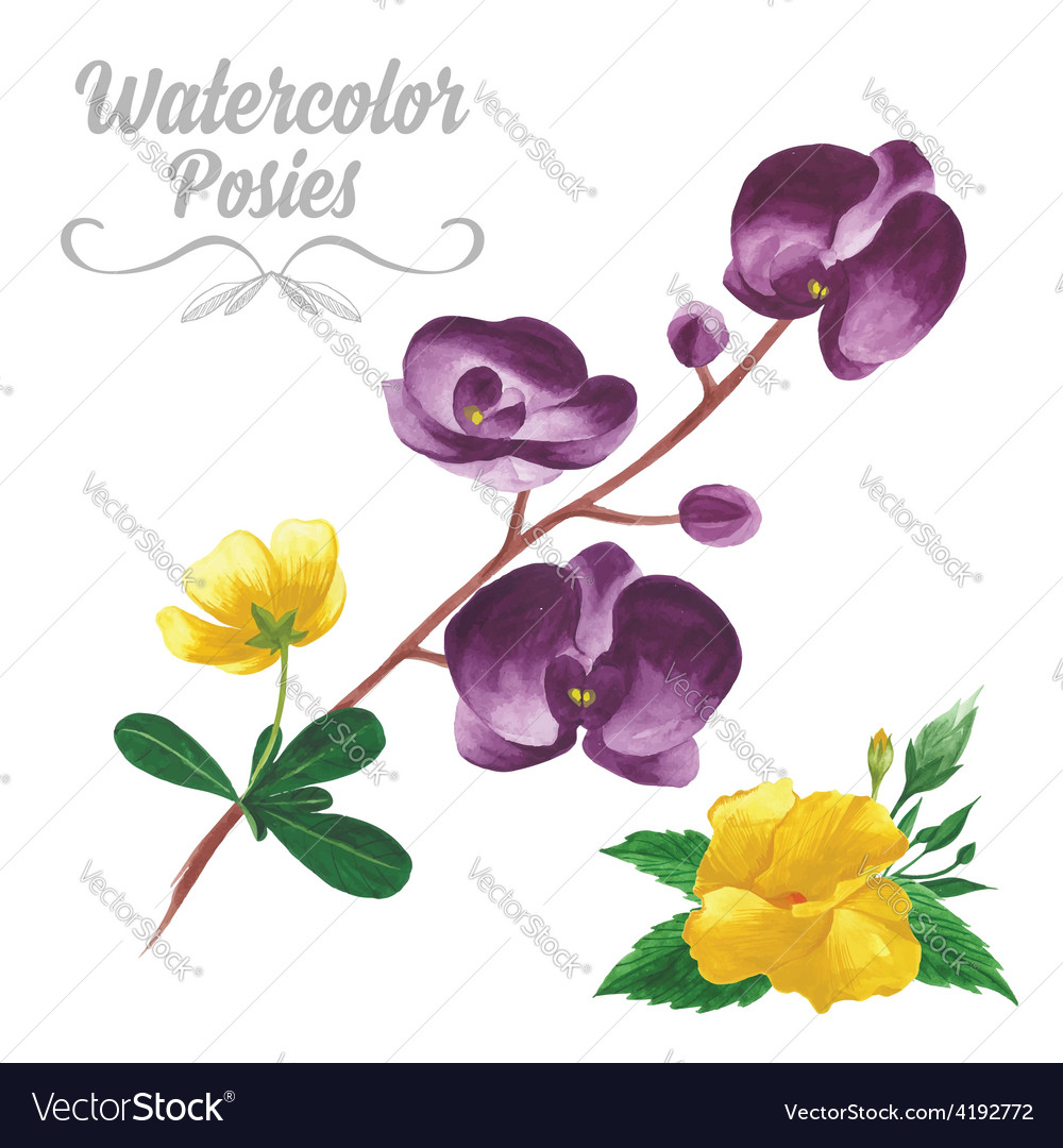 Isolated watercolor tropical flowers and leaves vector | Price: 1 Credit (USD $1)
