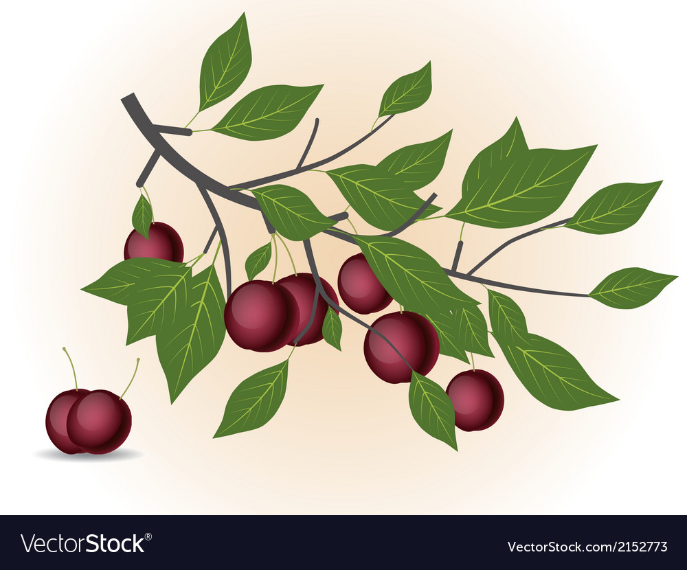 Red plum branch vector | Price: 1 Credit (USD $1)