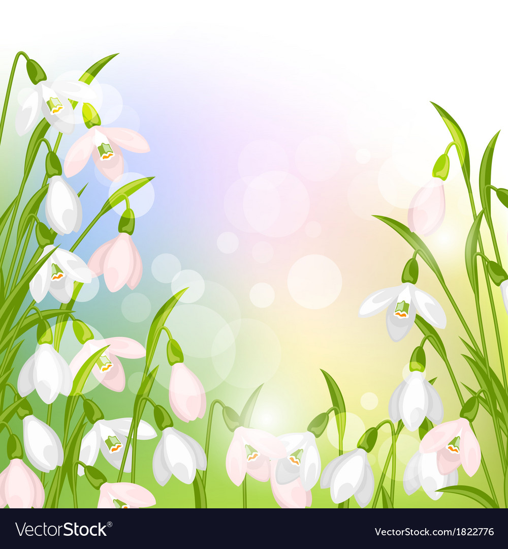 Spring flowers snowdrops natural background vector | Price: 1 Credit (USD $1)
