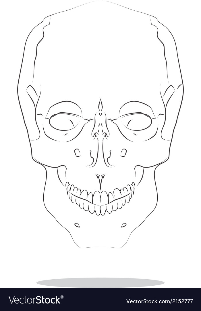 Cranium vector | Price: 1 Credit (USD $1)