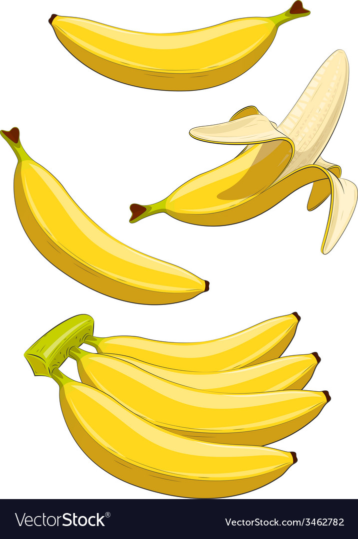 Banana tropical fruit vector | Price: 1 Credit (USD $1)