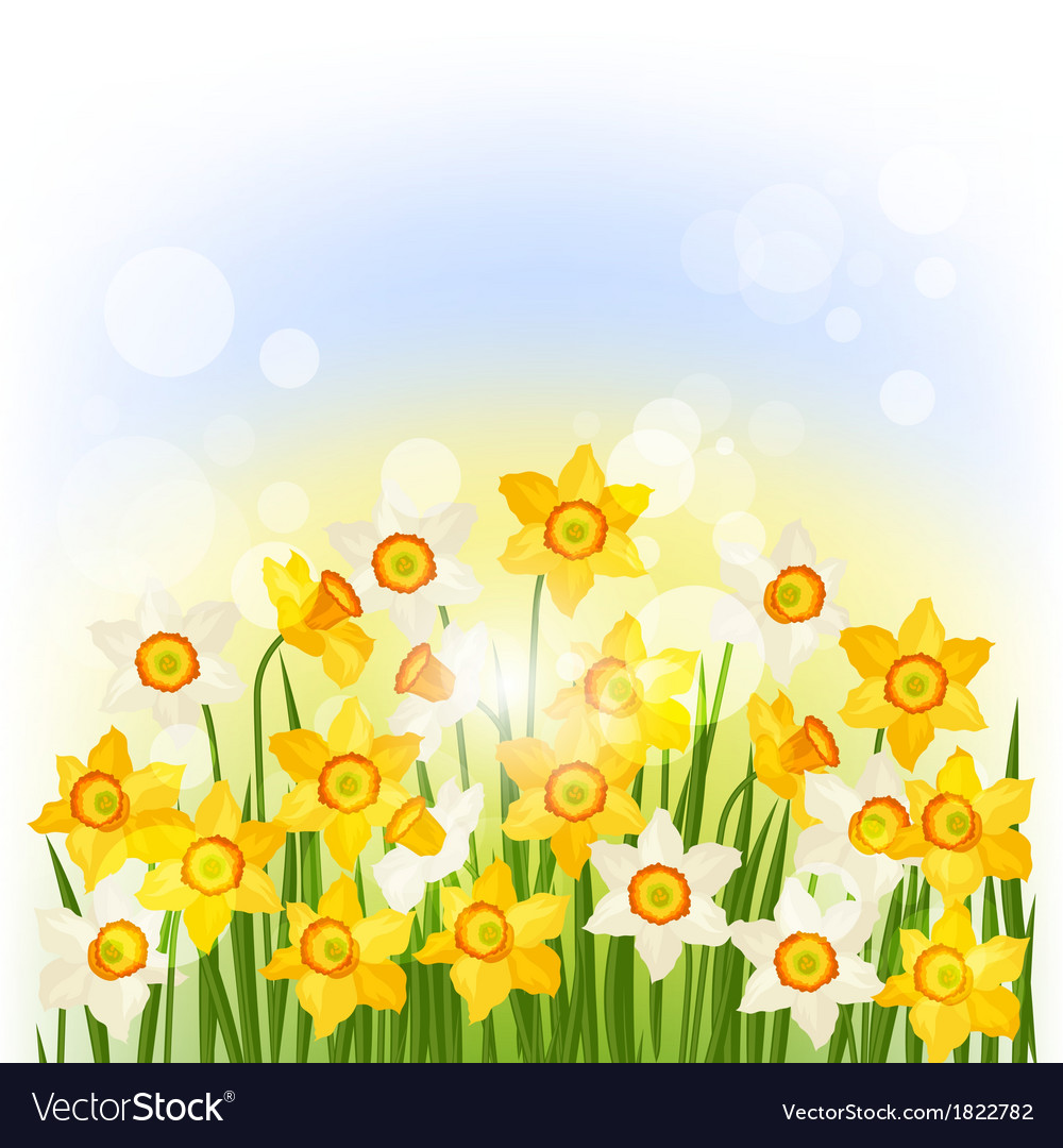 Spring flowers narcissus natural background vector | Price: 1 Credit (USD $1)