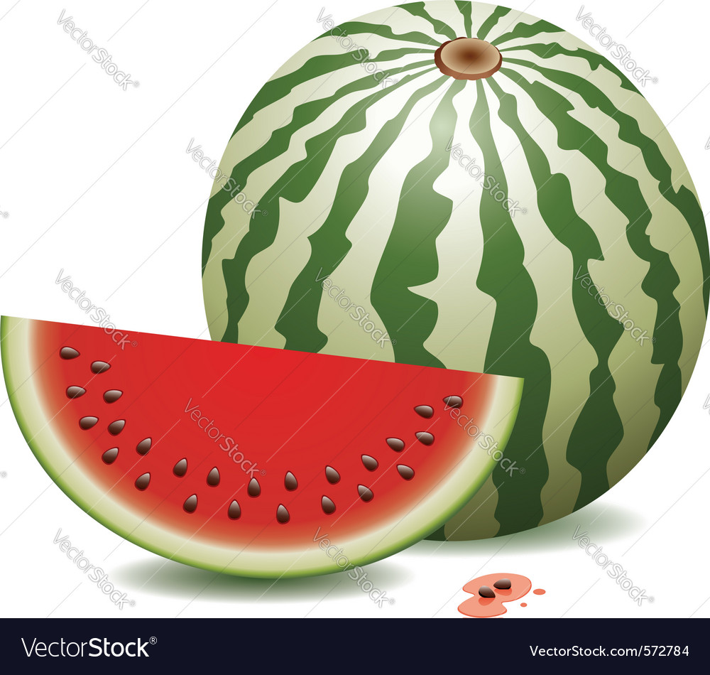 Watermelon and a slice vector | Price: 1 Credit (USD $1)