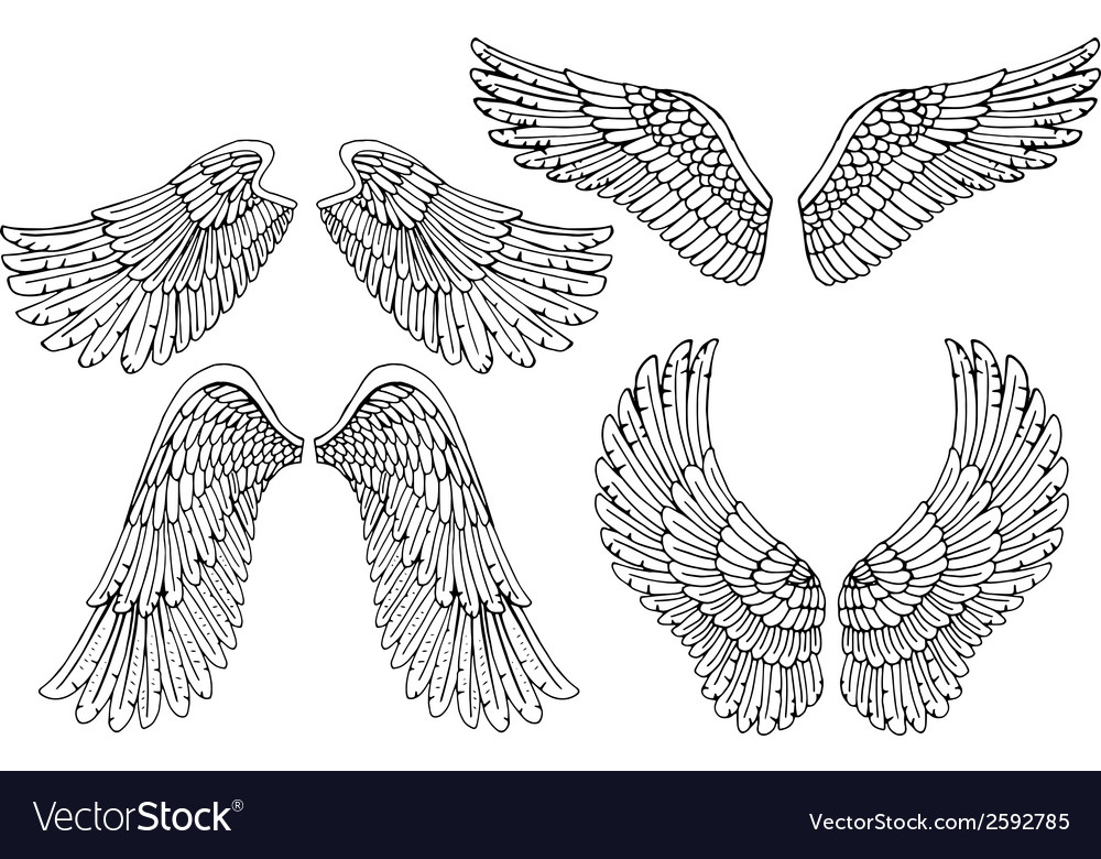 Set of four different angel wings vector | Price: 1 Credit (USD $1)