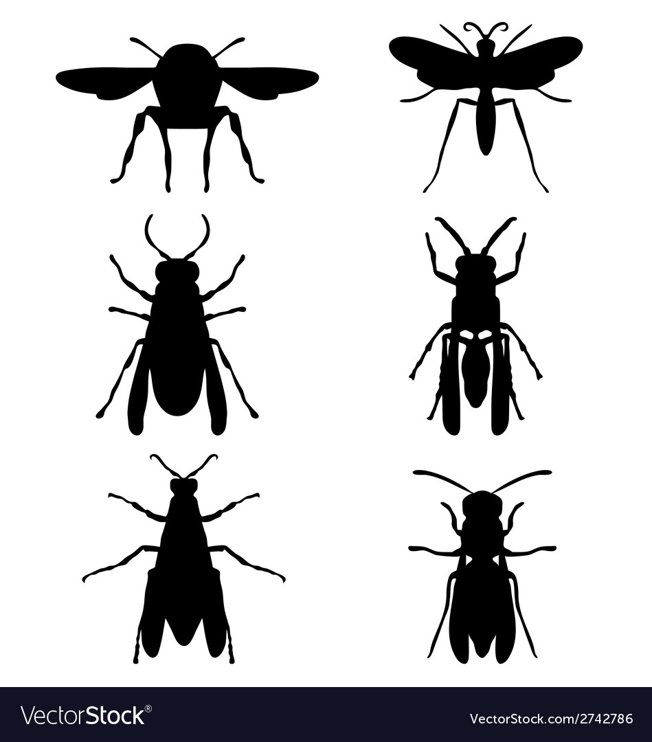 Wasps vector | Price: 1 Credit (USD $1)