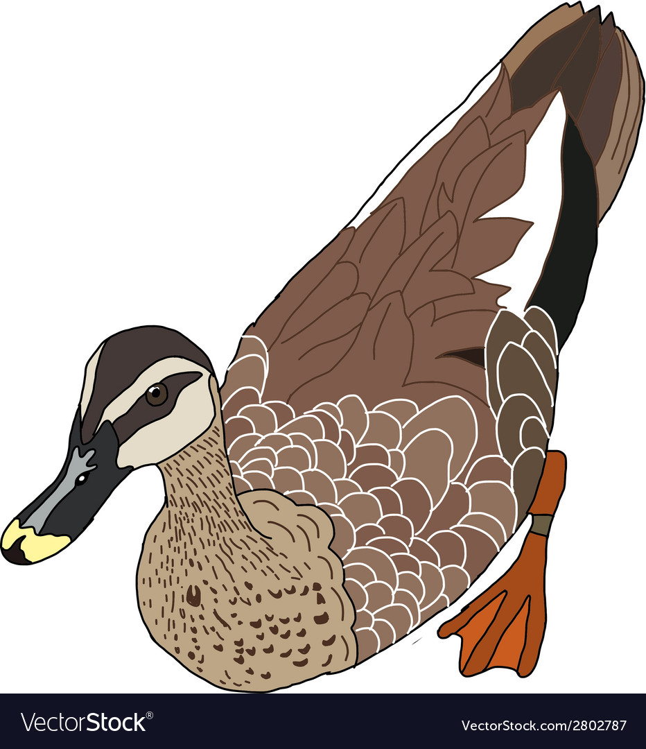 The of duck vector | Price: 1 Credit (USD $1)
