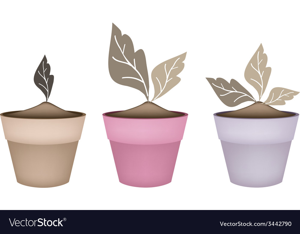 Three abstract brown trees in flower pots vector   Price: 1 Credit (USD $1)