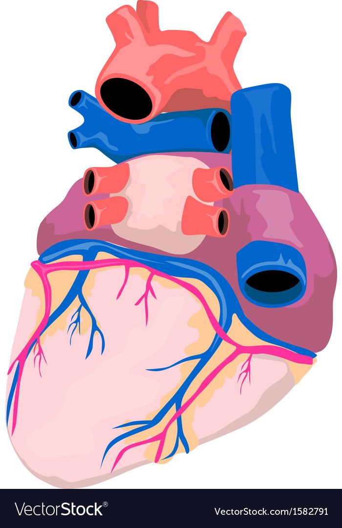 Heart organ retro vector | Price: 1 Credit (USD $1)