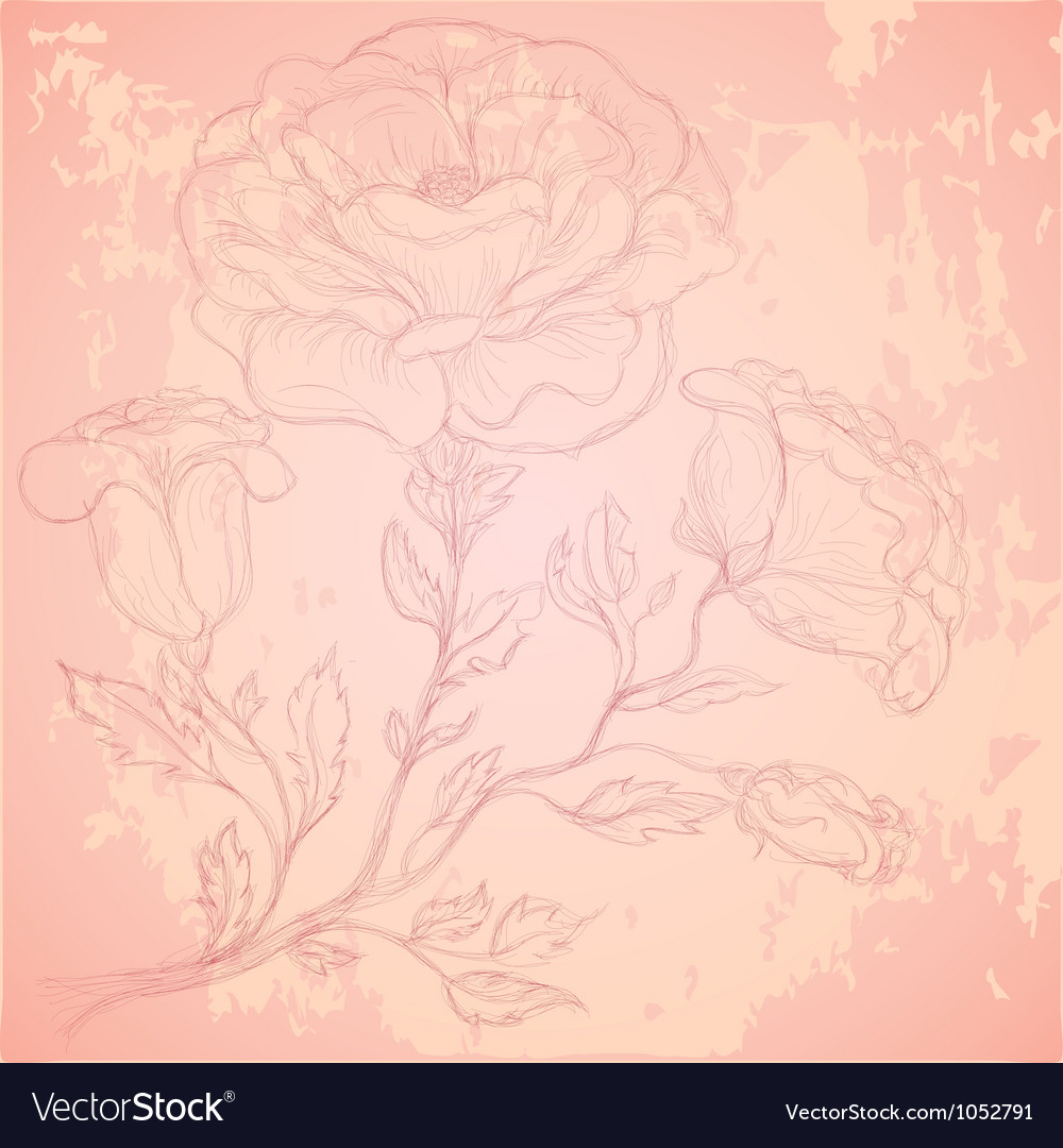 Sketch of rose branch on grungy texture vector | Price: 1 Credit (USD $1)