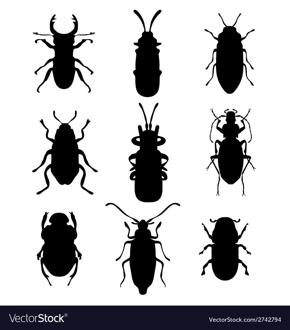 Bugs vector | Price: 1 Credit (USD $1)