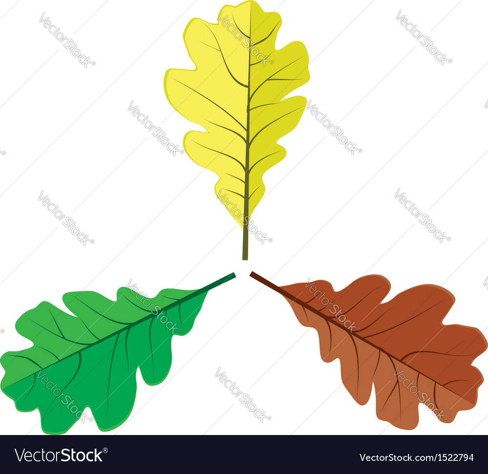 Three oak leaves vector | Price: 1 Credit (USD $1)