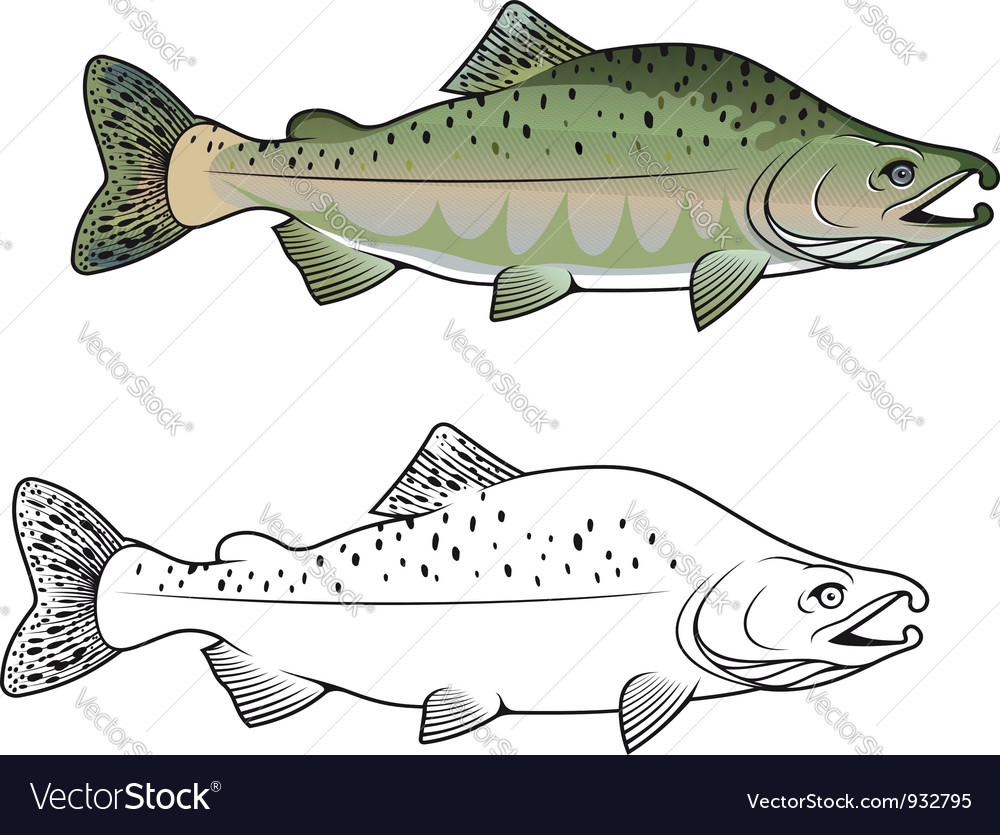 Hunchback salmon fish vector | Price: 1 Credit (USD $1)