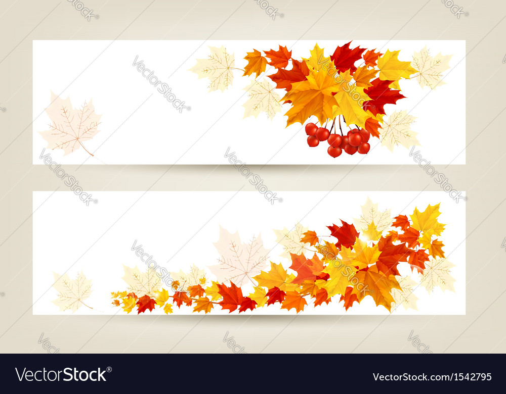Two autumn banners with color leaves vector | Price: 1 Credit (USD $1)