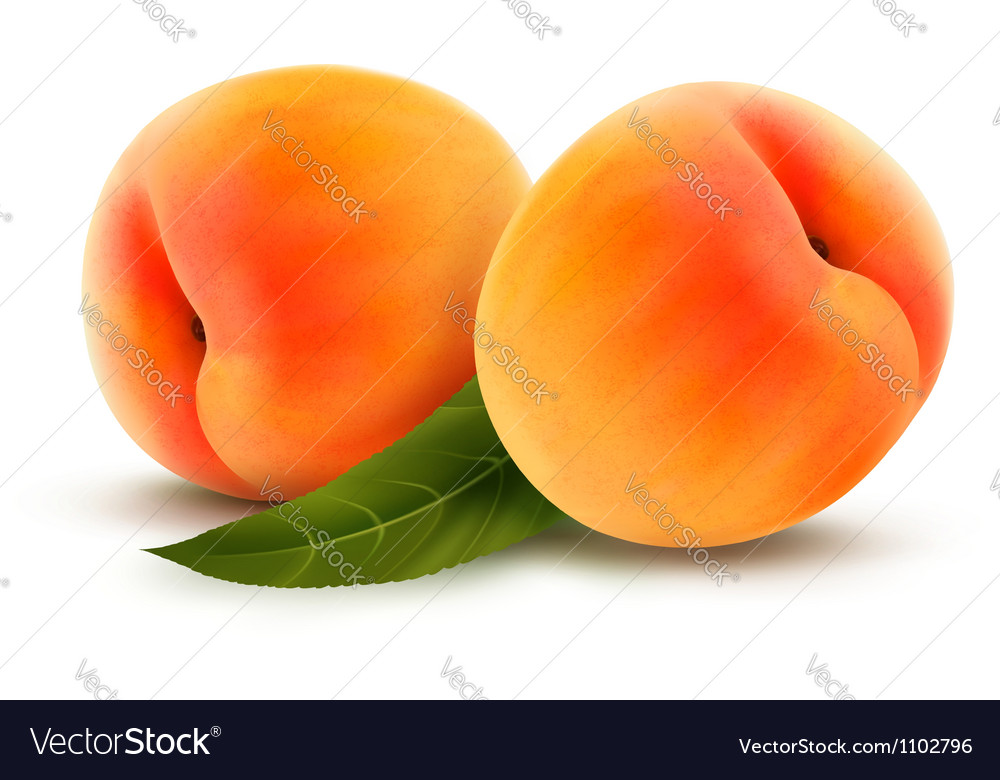 Rpe peach isolated on white vector