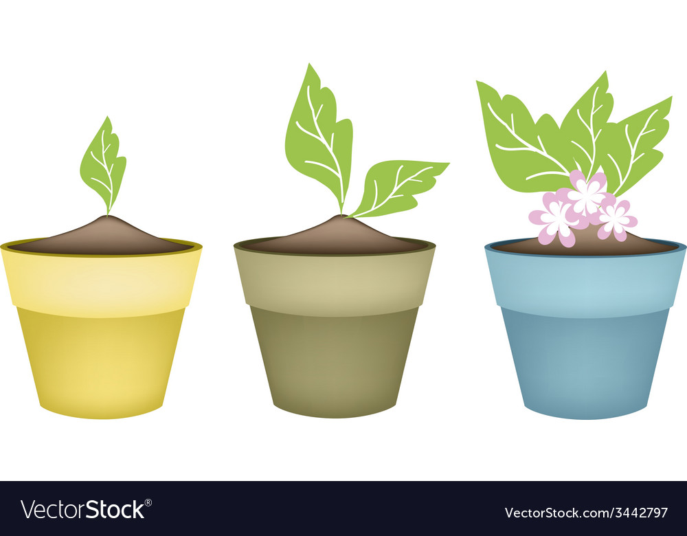 Beautiful pink flower in terracotta flower pots vector | Price: 1 Credit (USD $1)