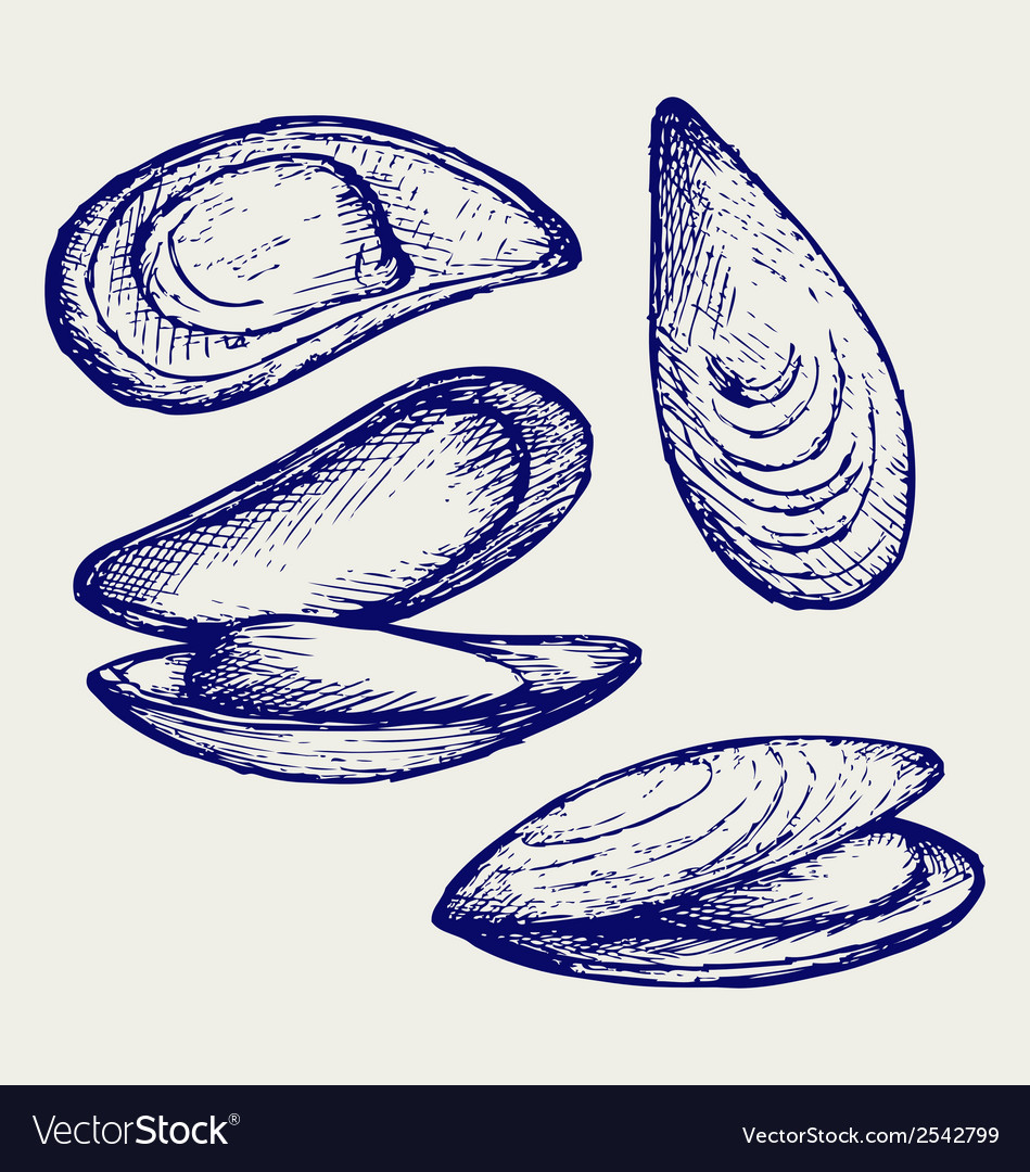 Cooked lipped mussel vector | Price: 1 Credit (USD $1)