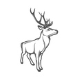 Adult wild deer isolated on white background vector