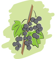 Bunch of black currant vector