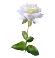 White rose vector