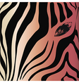 Zebra head and eye on a colored background vector