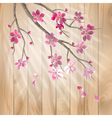Spring cherry blossom flowers on a wood texture vector