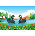 A river with two ducks vector