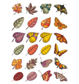 Collection of leaves and butterflies vector
