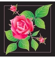 Beautiful rose isolated on black vector