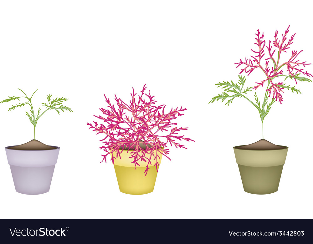 Beautiful pink flower on tree in terracotta pots vector | Price: 1 Credit (USD $1)
