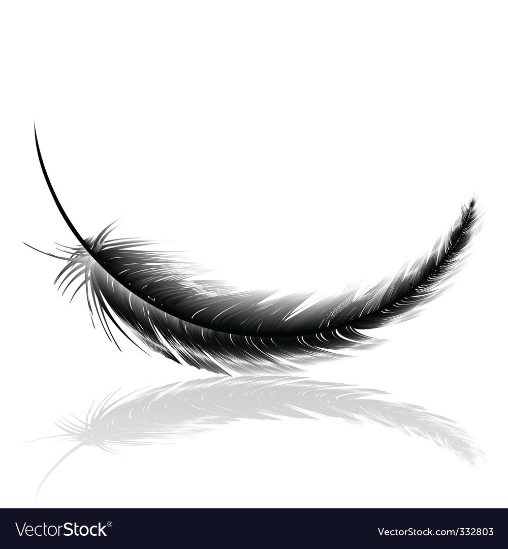 Feather vector | Price: 1 Credit (USD $1)