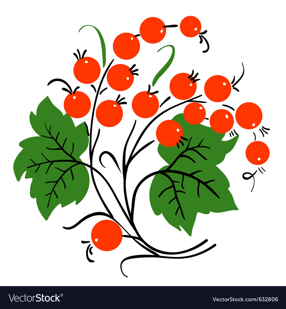 Bunch of red currant ripe berry vector | Price: 1 Credit (USD $1)