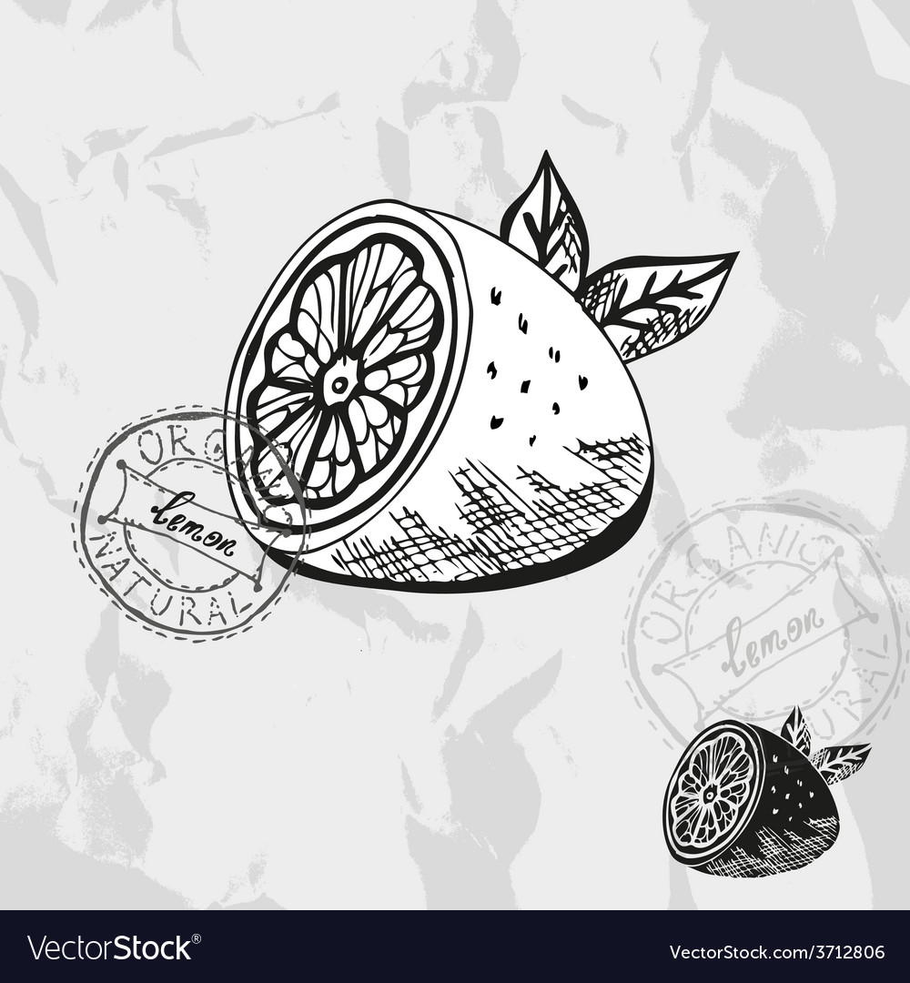 Hand drawn decorative lemon vector | Price: 1 Credit (USD $1)