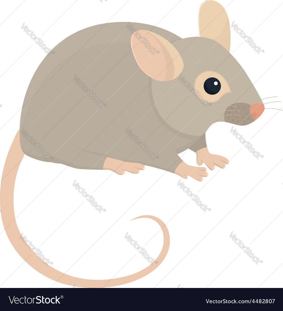 House mouse vector