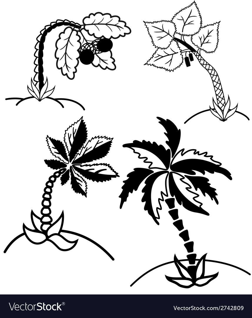 Palm trees collection vector | Price: 1 Credit (USD $1)