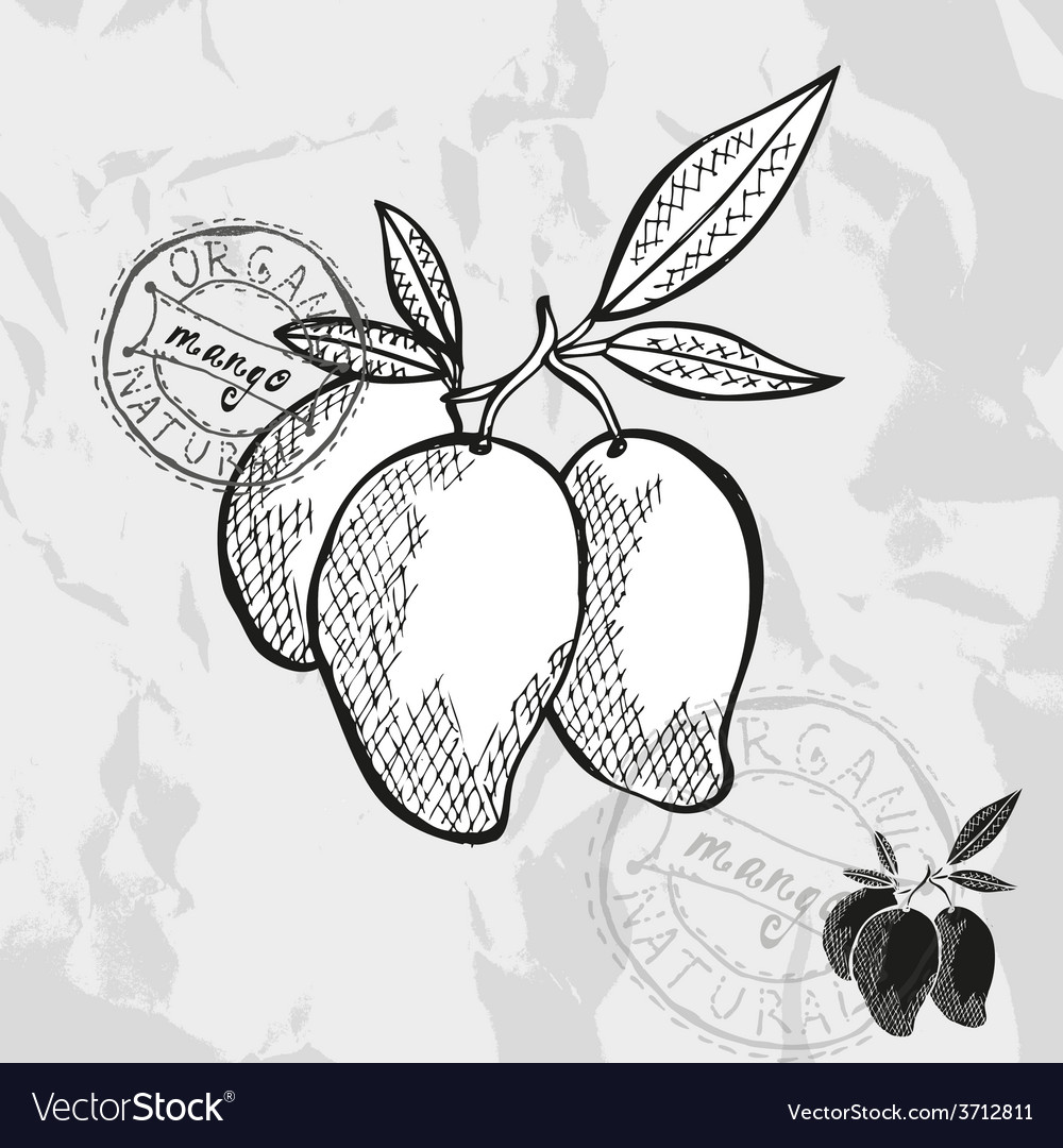 Hand drawn decorative mango vector | Price: 1 Credit (USD $1)