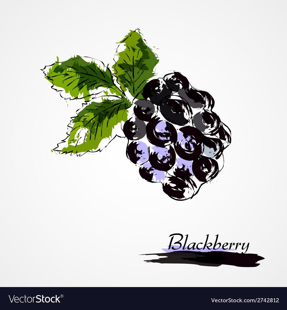 Blackberry vector | Price: 1 Credit (USD $1)