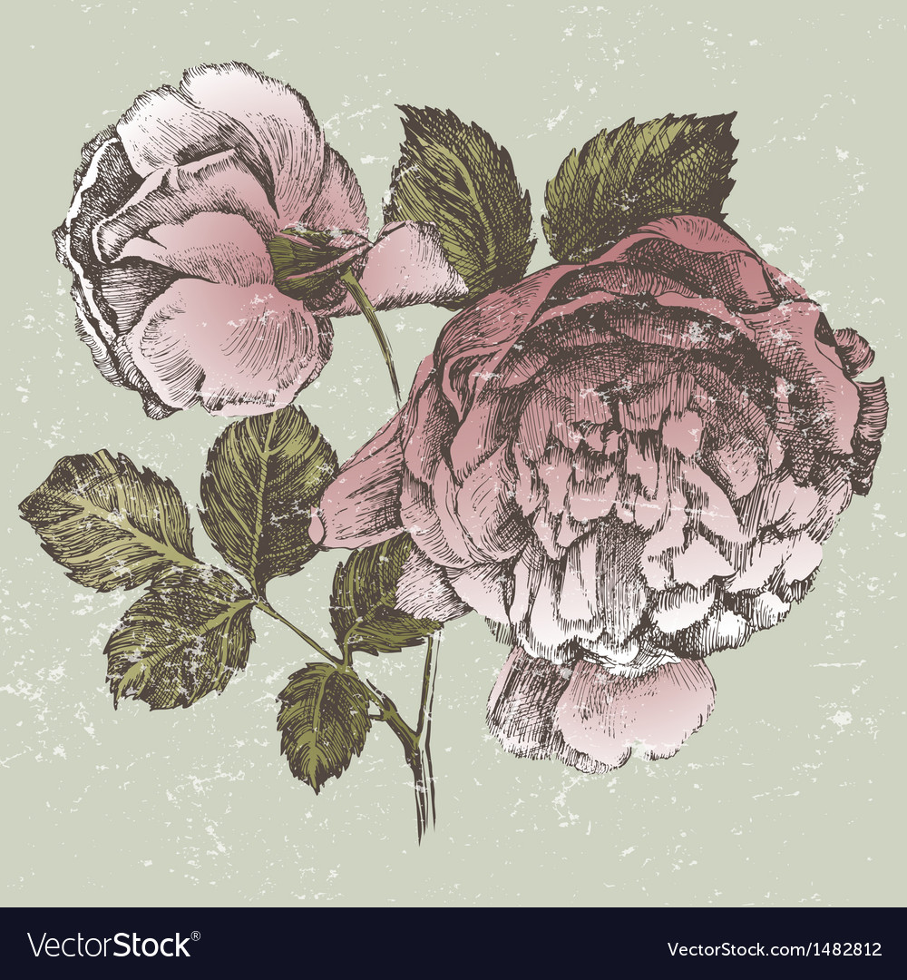 Old style roses vector | Price: 1 Credit (USD $1)