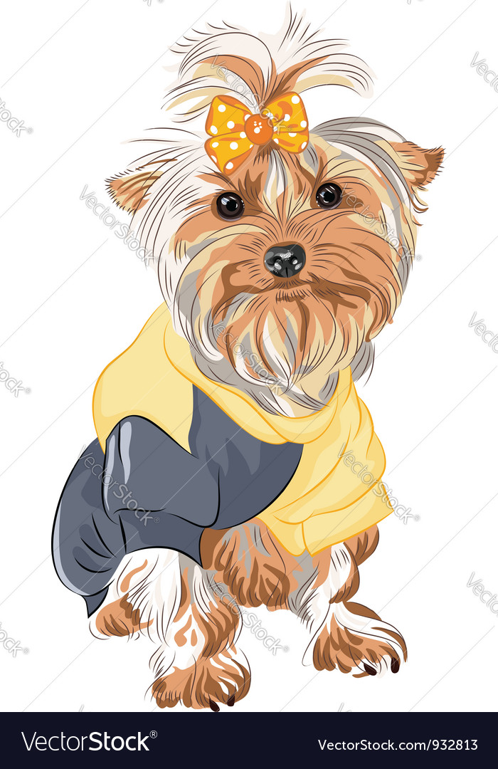 Pedigreed dog yorkshire vector | Price: 3 Credit (USD $3)