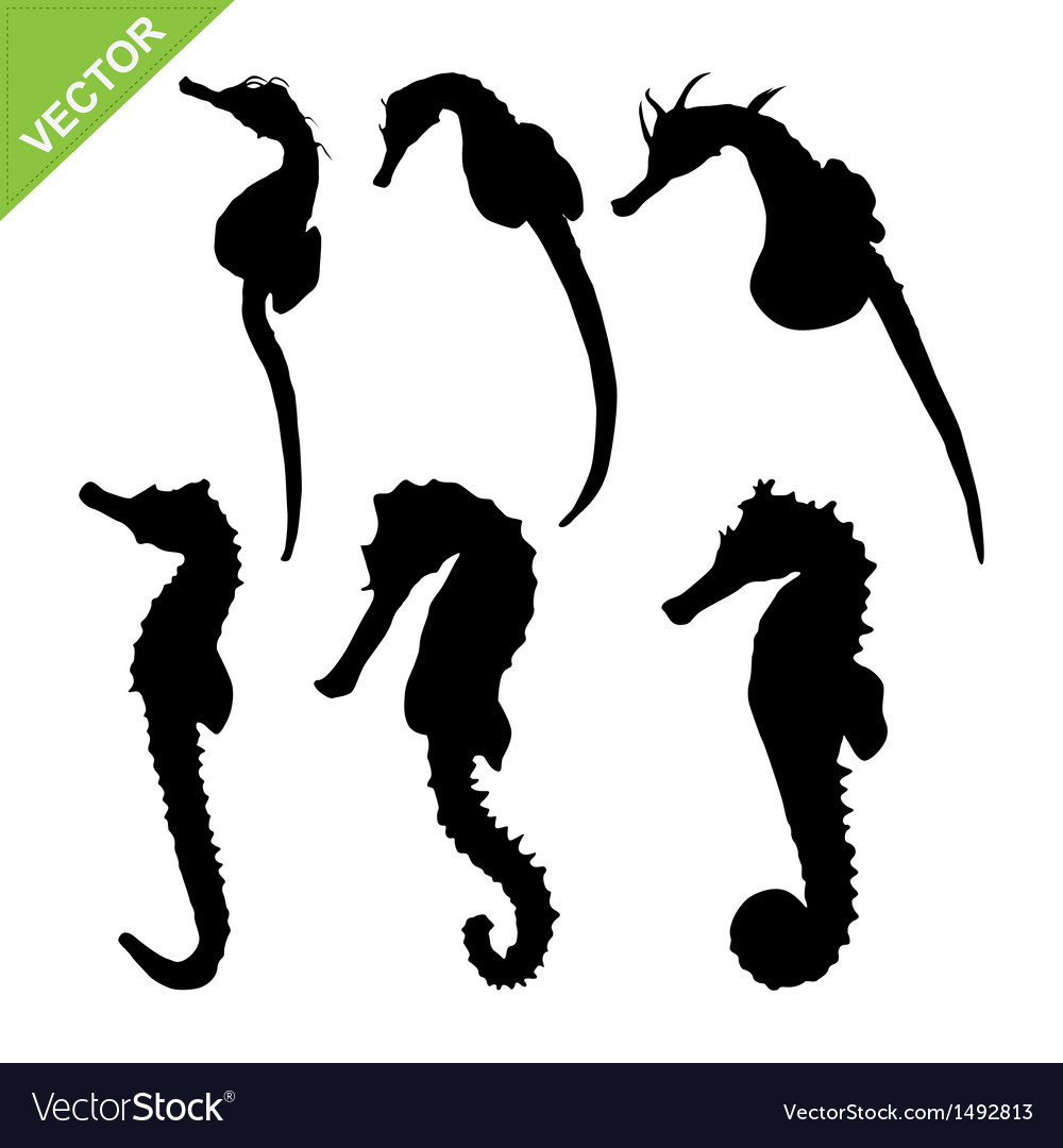 Seahorse silhouette vector | Price: 1 Credit (USD $1)