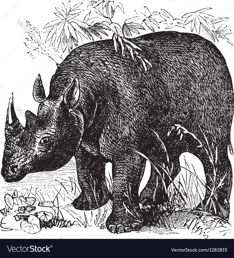 Rhinoceros vintage engraving vector | Price: 1 Credit (USD $1)