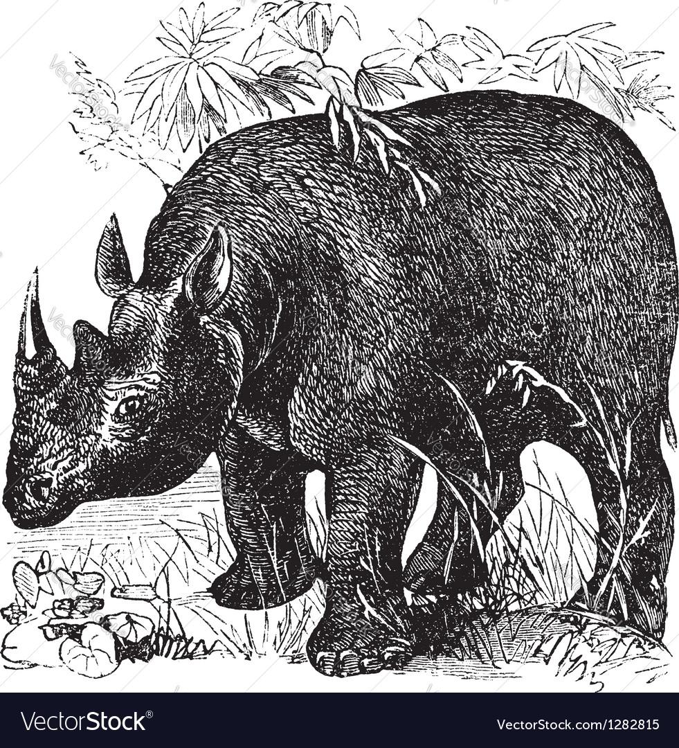 Rhinoceros vintage engraving vector   Price: 1 Credit (USD $1)