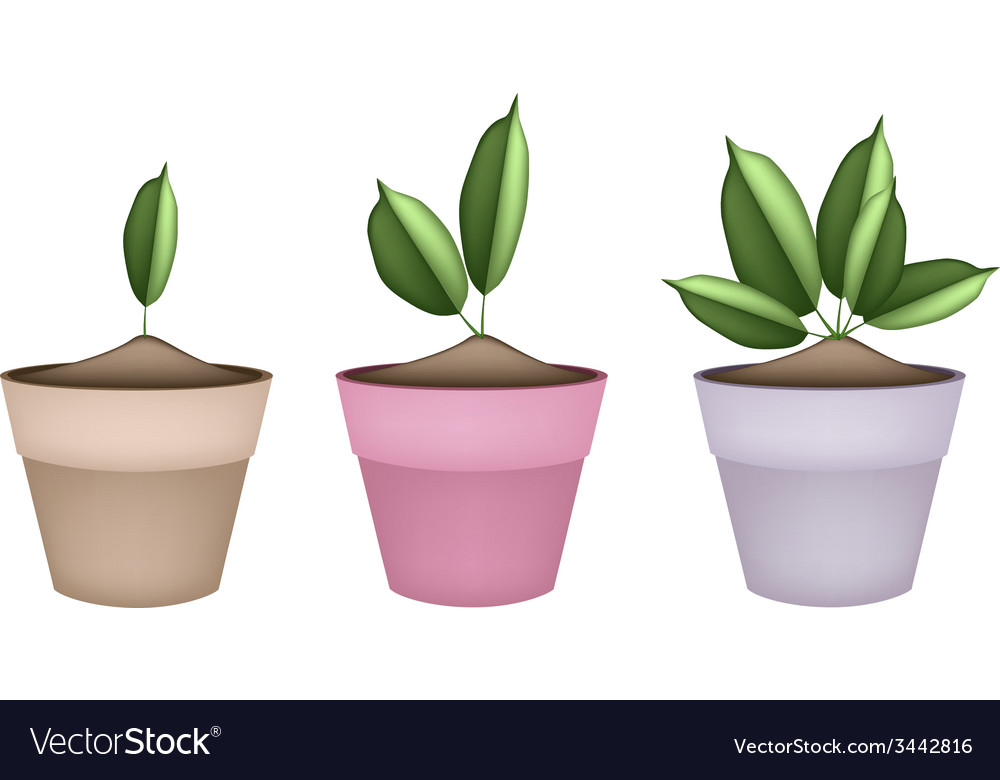 Beautiful green trees in ceramic flower pots vector | Price: 1 Credit (USD $1)