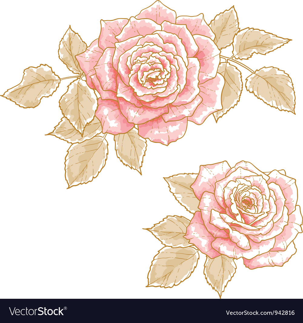 Pink roses vector   Price: 1 Credit (USD $1)